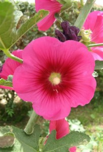 235 Grote bloem_jpg