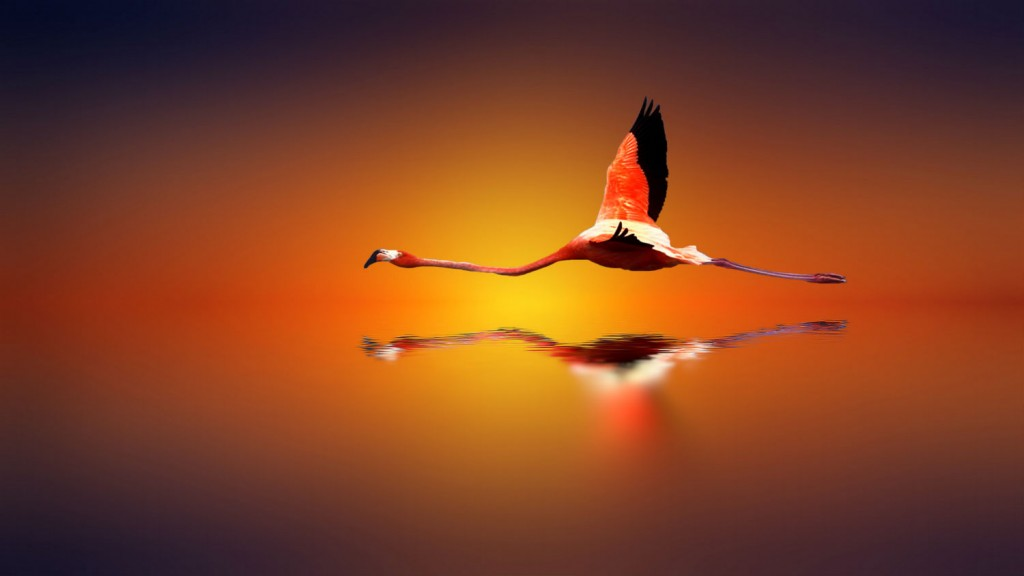 amazing-FLIGHT-OF-THE-SUN-SPELLBINDING-BIRDS2