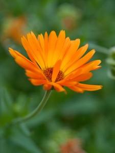 eetbarebloemen04