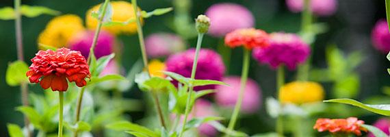 NC-Arboretum-Flowers-Banner-1
