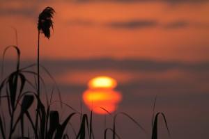 zonsopkomst-riet