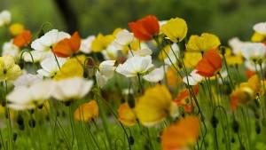 Nature___Flowers_Beautiful_wild_flowers_079676_