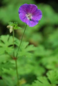bloemen-008