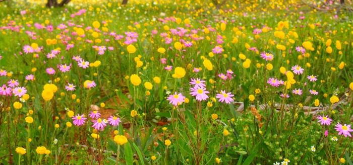 wildflower_heading
