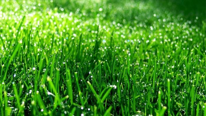 Groen-gras-achtergronden-hd-gras-wallpapers-afbeeldingen-plaatjes-081