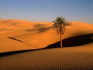 woestijn01