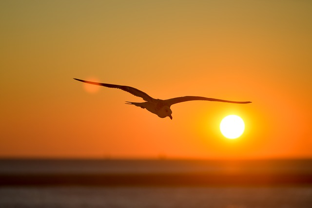seagull-601287_640