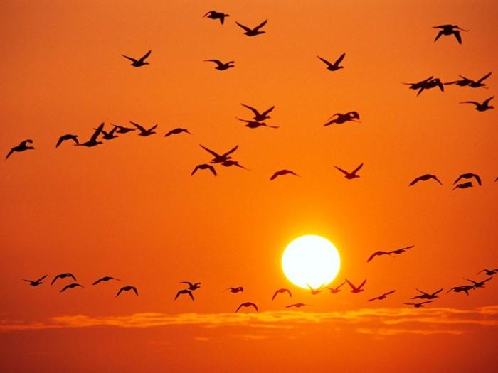 orange-birds-rosing_1463_990x742