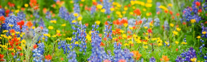wildflower-banner-image