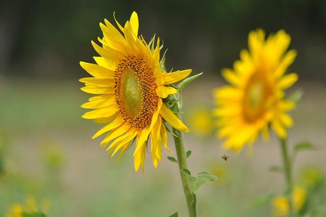 flowers-166912_640