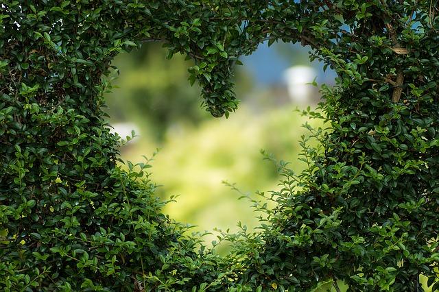 heart-1192662_640