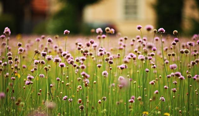 flowers-1522720_640