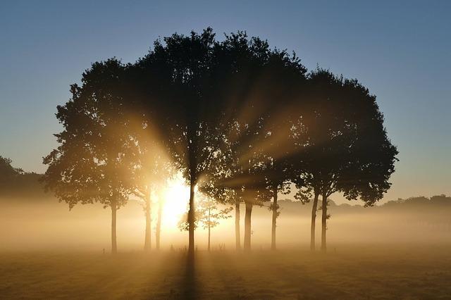 trees-1657824_640