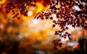 autumn-leaves-wallpaper7-600x375