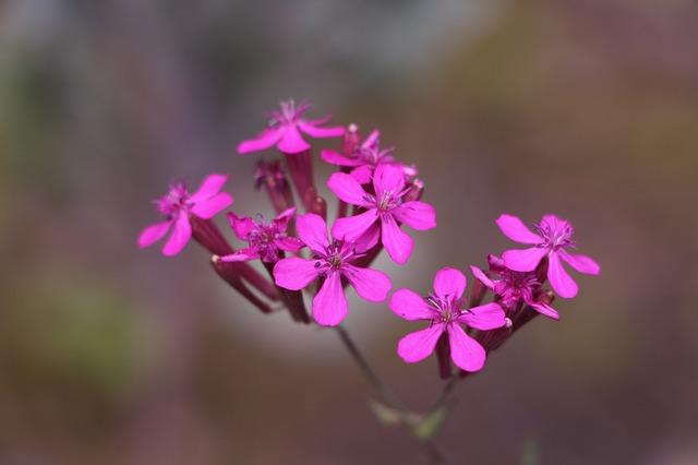 wild-flower-788248_640