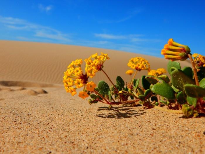 desert_flowers_by_cultofthedeadchicken-d96xtzh